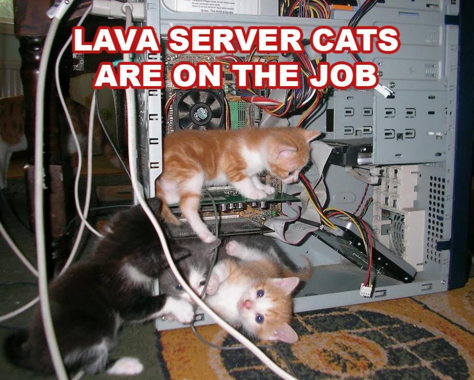 lava_server_cats.jpg